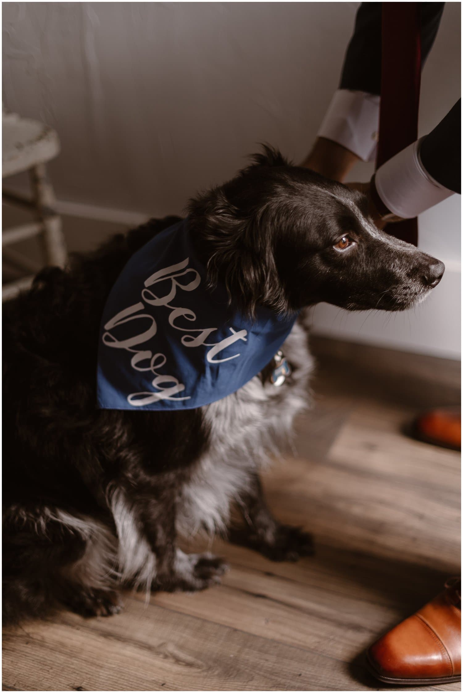 """A black dog wearing a bandana that says """"Best Dog"""" while sitting on the floor."""