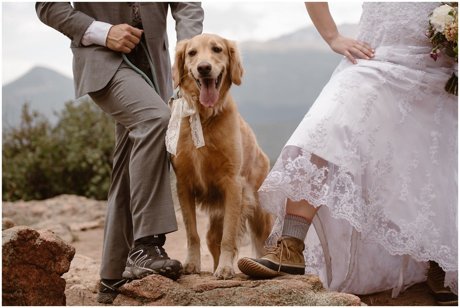 A dog wearing a bow with a bride and groom on either side.