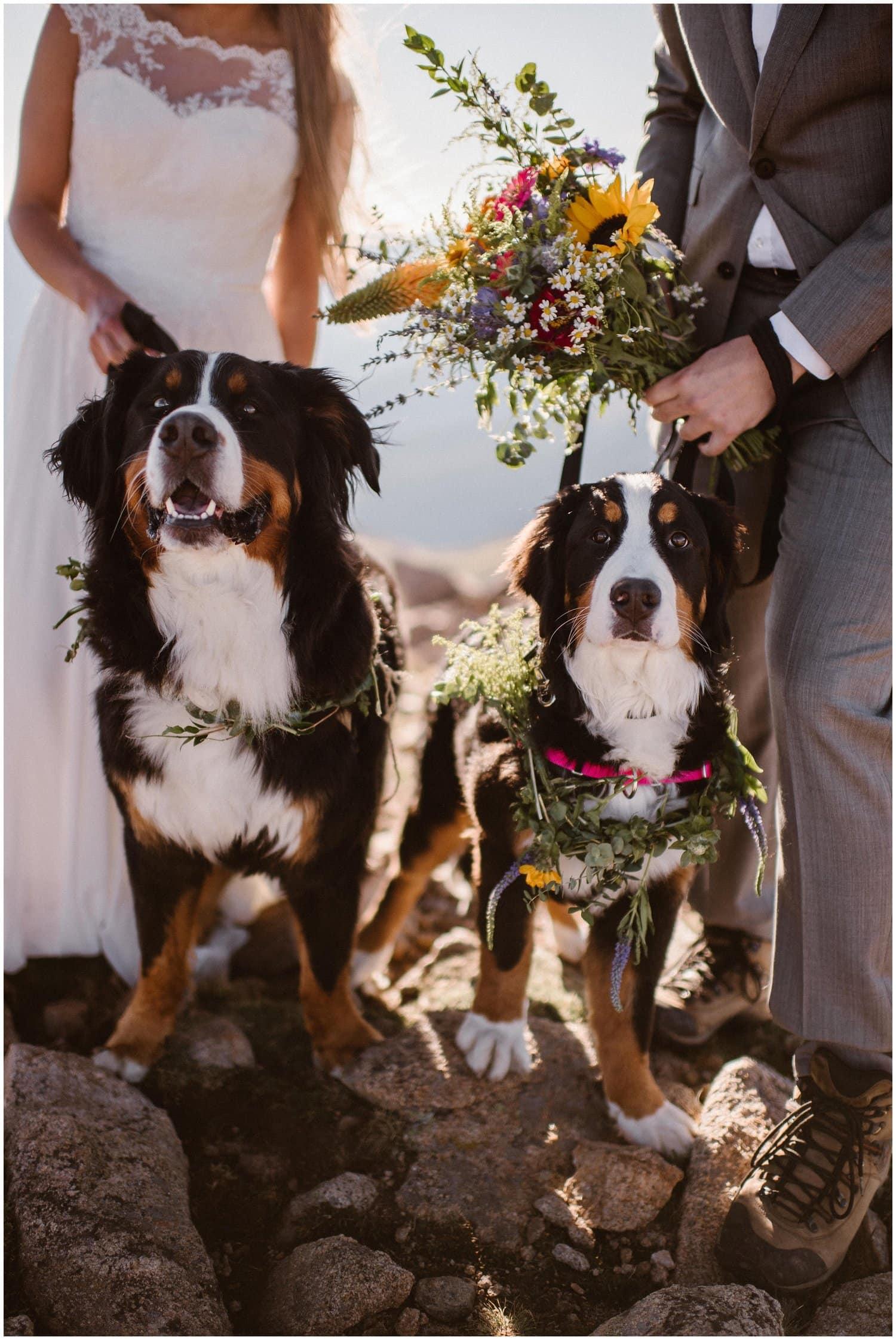 Two dogs wear flower garlands.