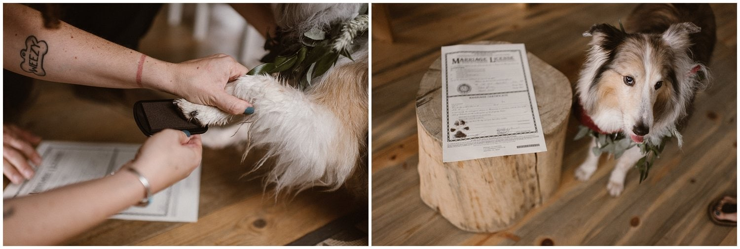 Two individual photos with a dog stamping his paw in ink on the left and a marriage license and a dog on the right.
