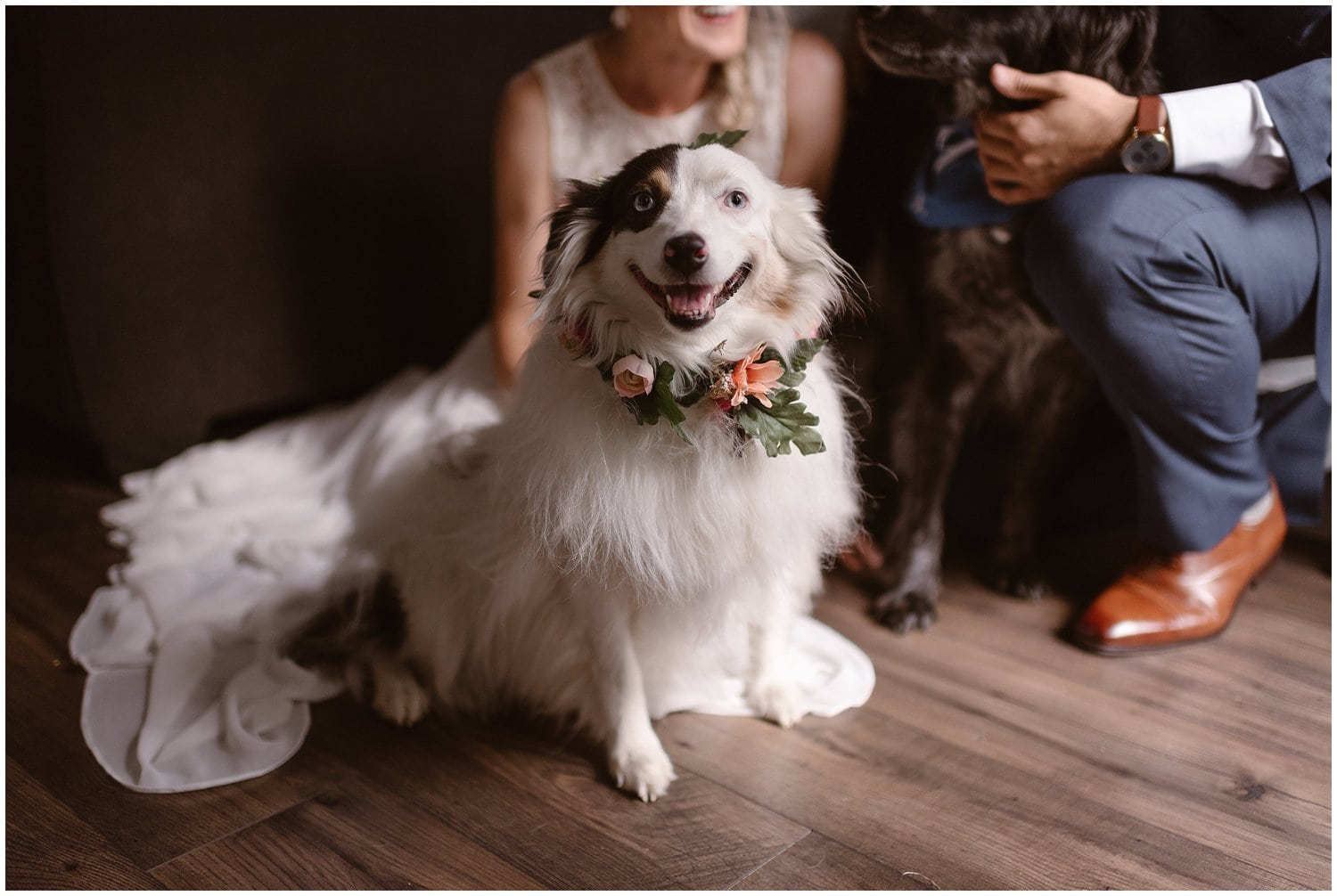 A white dog in a flower garland looks at the camera.