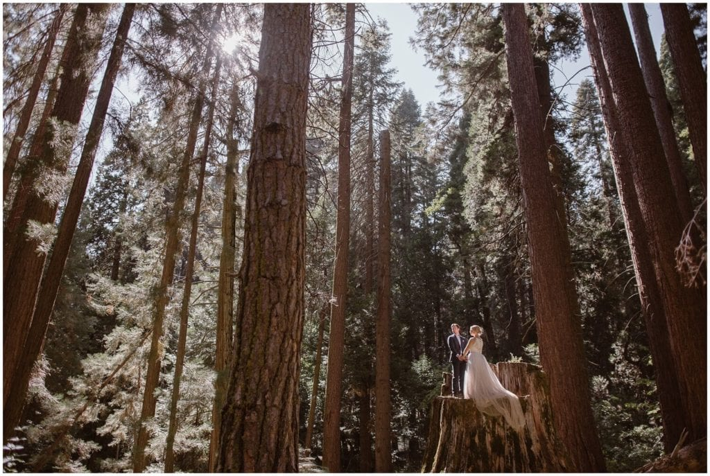 A bride and groom stand on a tree stump in the middle of the forest on their wedding day.