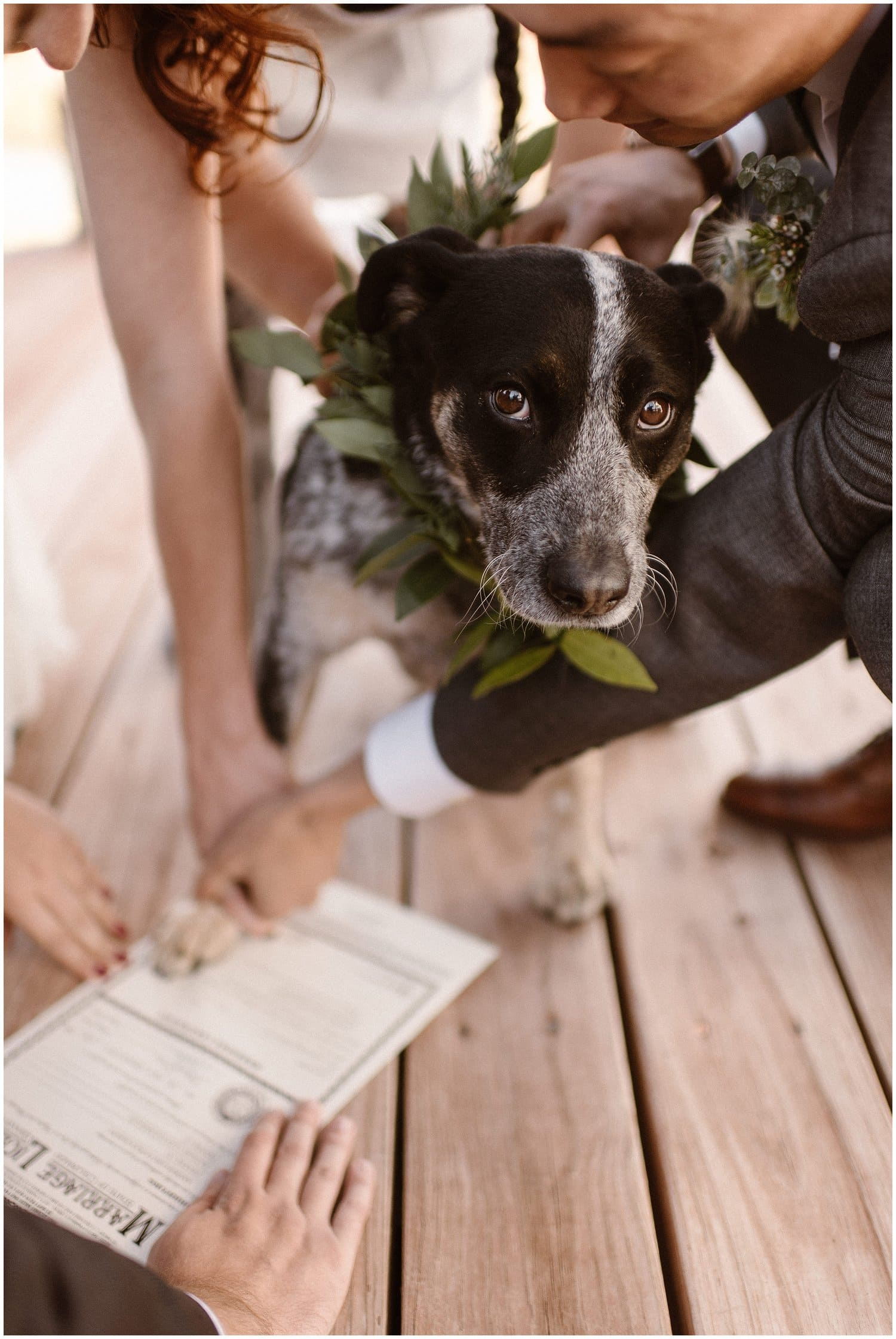 A black dog stamps his paw on a marriage license.