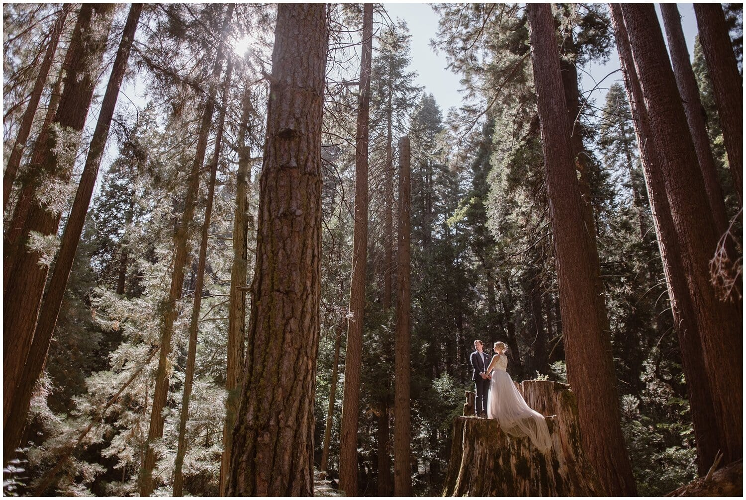 Bride and groom stand on a tree stump in a forest on their wedding day.