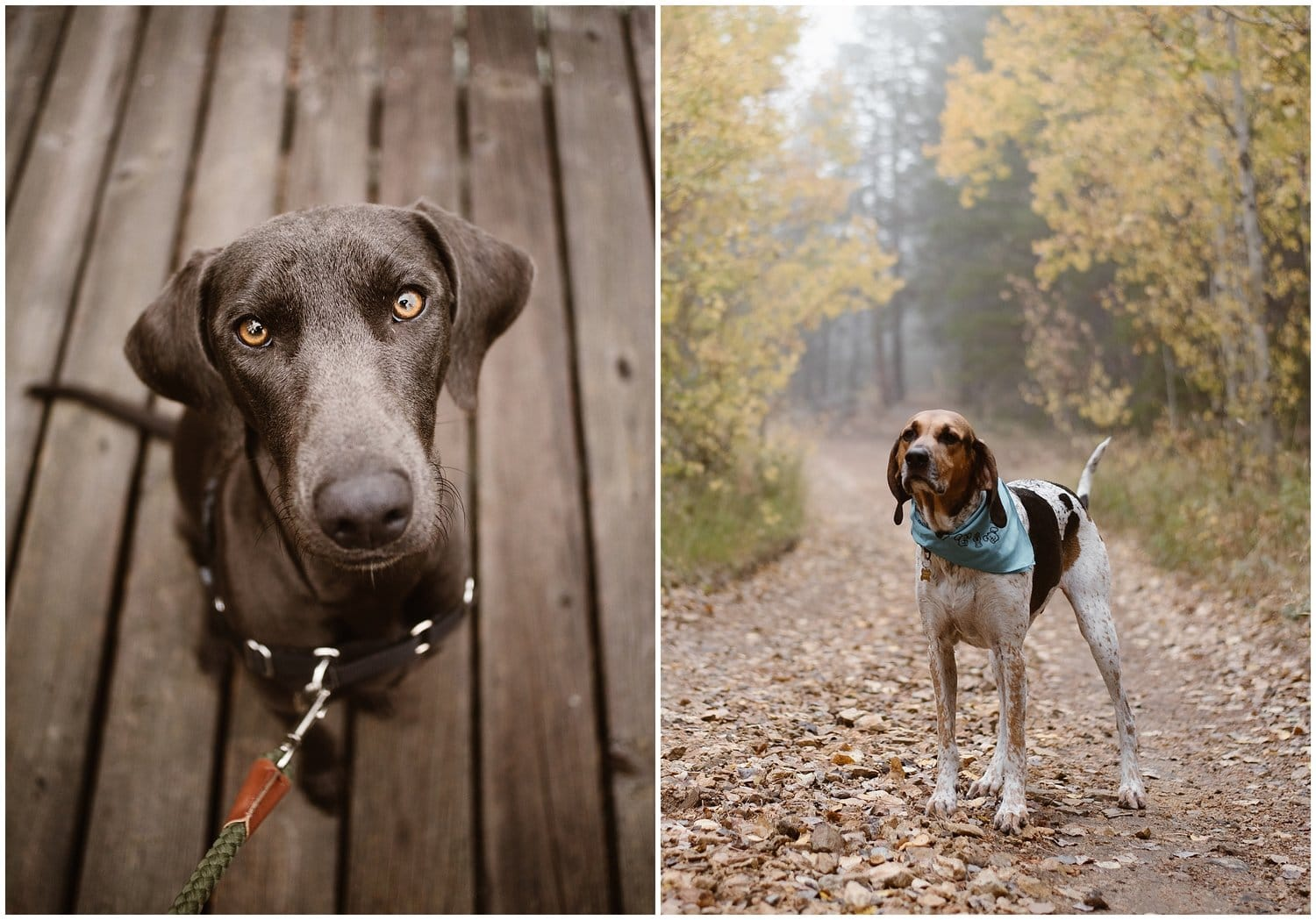 Two individual photos with a black dog on the left and a white and brown dog on the right.